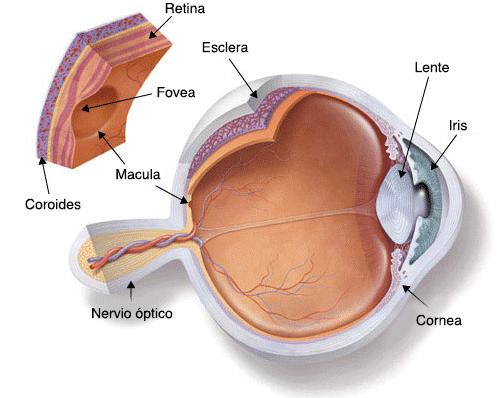 El sentido de la vista