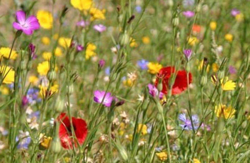 Guía de flores silvestres del campo en primavera